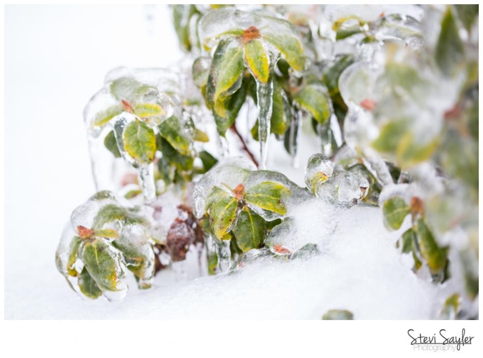 Stevi Sayler Photo - Snowpocalypse - Eugene Oregon Snow Storm February
