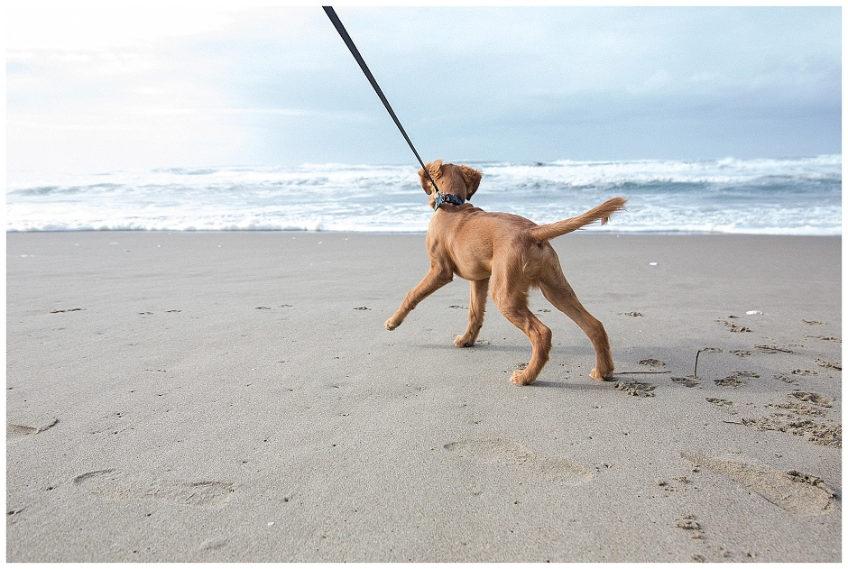 Florence Oregon // Happy The Golden Pup // Oregon Coast // Stevi Sayler Photography