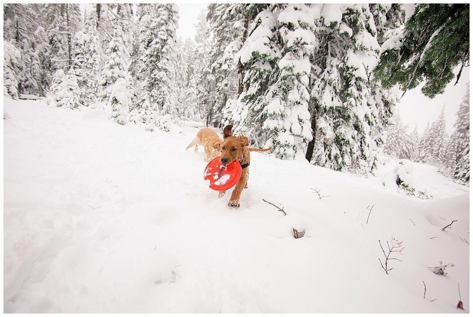 Mount Ashland Snow Adventures // Happy The Golden Pup // Stevi Sayler Photography
